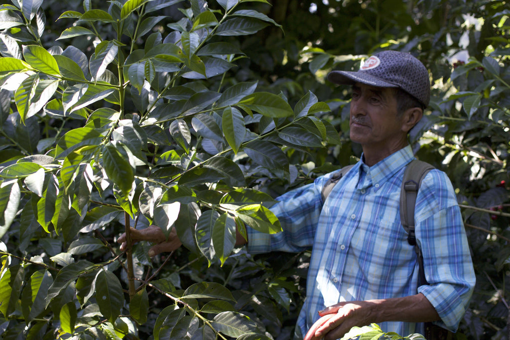 Eduardo, farm manager at Finca Santa Rita