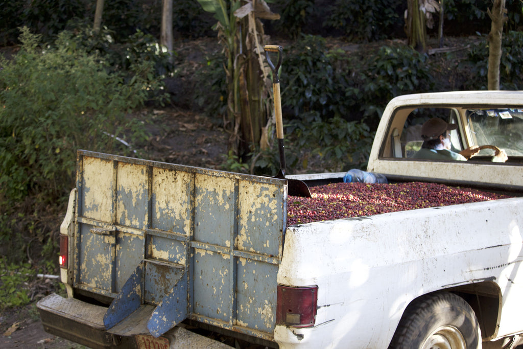 Don Carlos arriving at Don Eli with a truckload of cherry