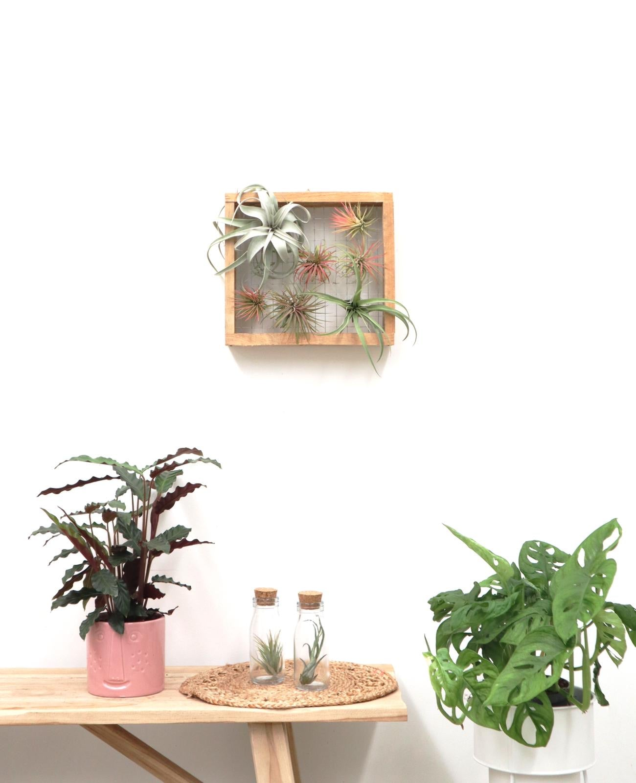 Airplant Wooden Frame mini