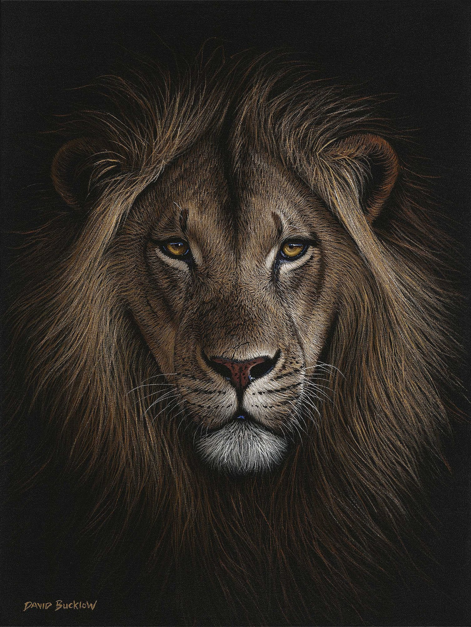 South African Limited Editions by David Bucklow - His Majesty - Male Lion - Fine Art Portfolio