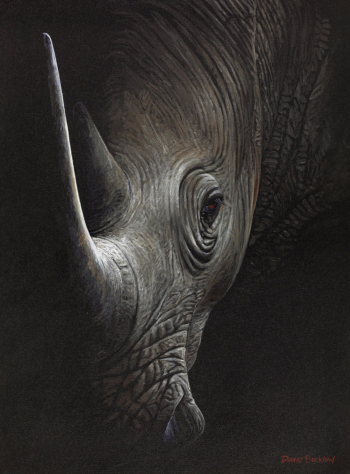 South African Limited Editions by David Bucklow - In the Shadows - Rhino - Fine Art Portfolio