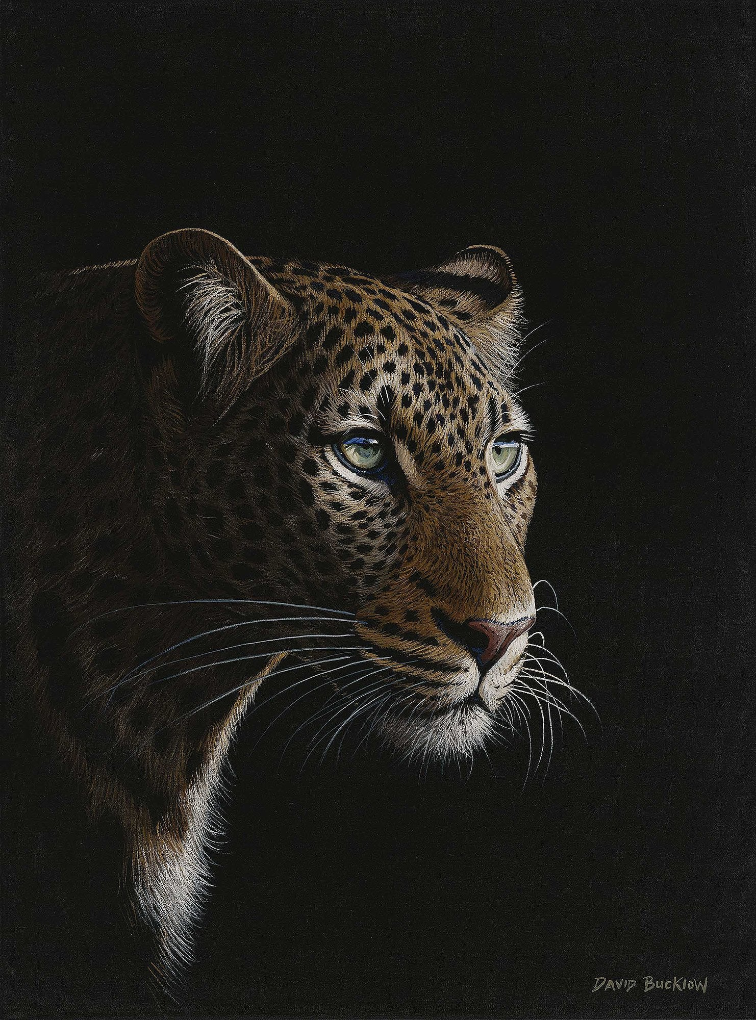 Leopard painting fine art print of a leopard at night entitled Patiently Waiting by David Bucklow artist