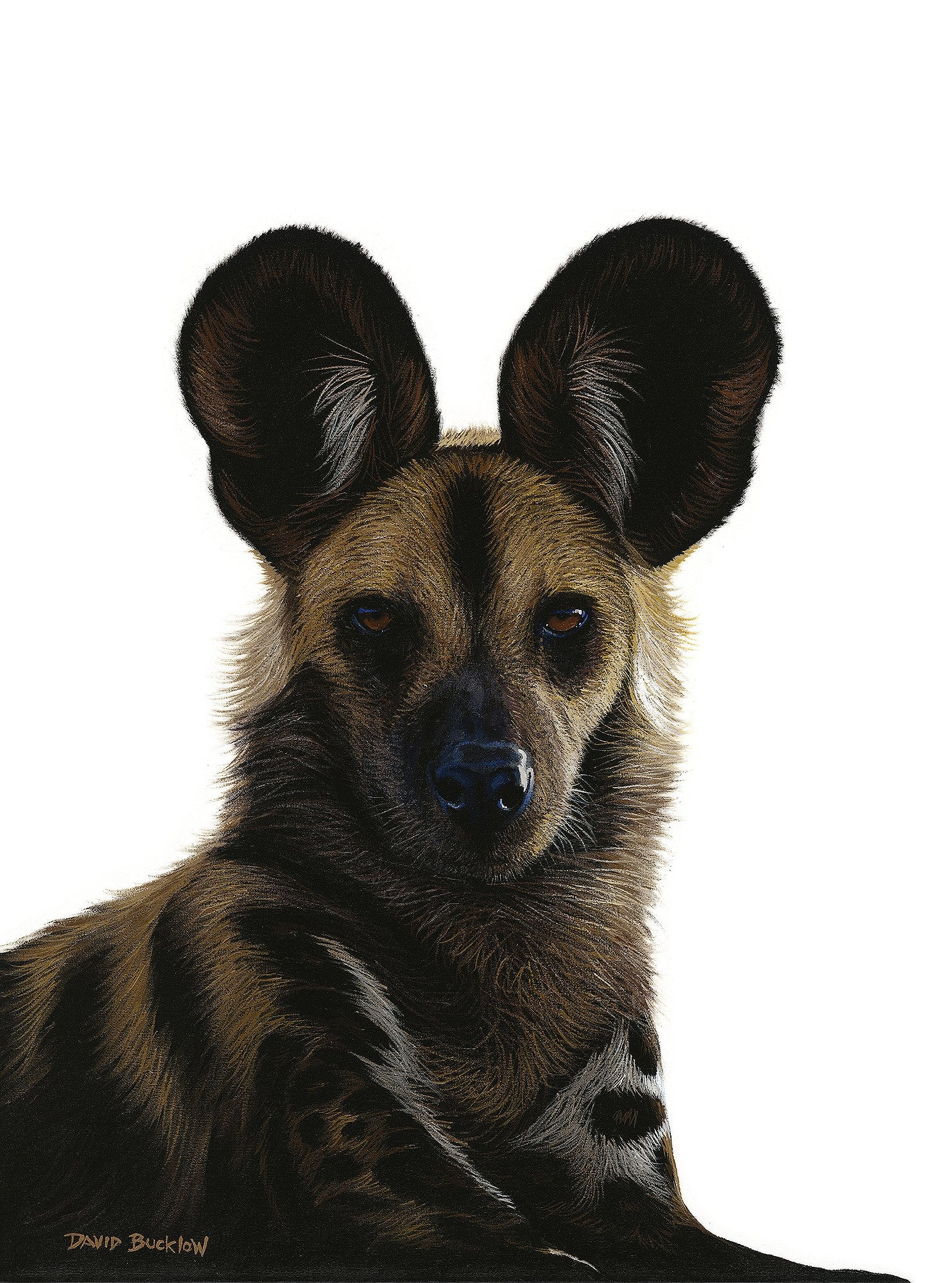 South African Limited Editions by David Bucklow - Leader of the Pack - Wild Dog - Fine Art Portfolio