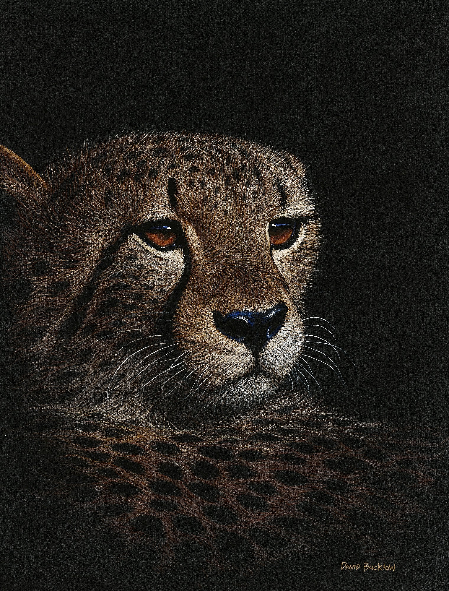 Cheetah Print by David Bucklow of a Cheetah at Night