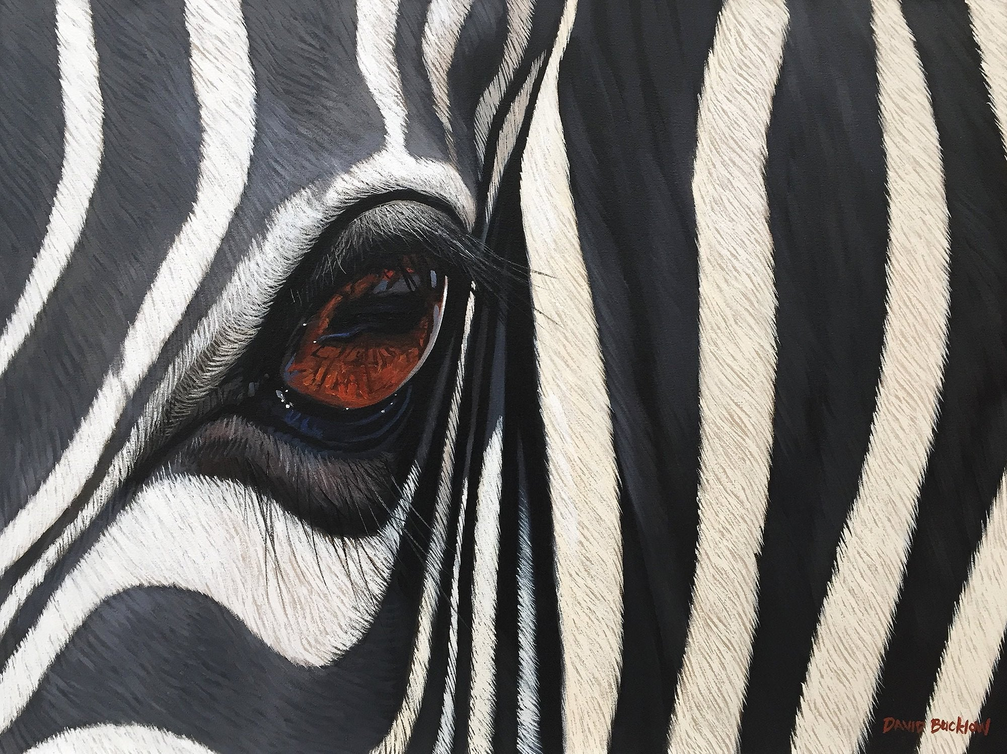 South African Limited Editions by David Bucklow - Shimmer - Zebra Up Close - Fine Art Portfolio