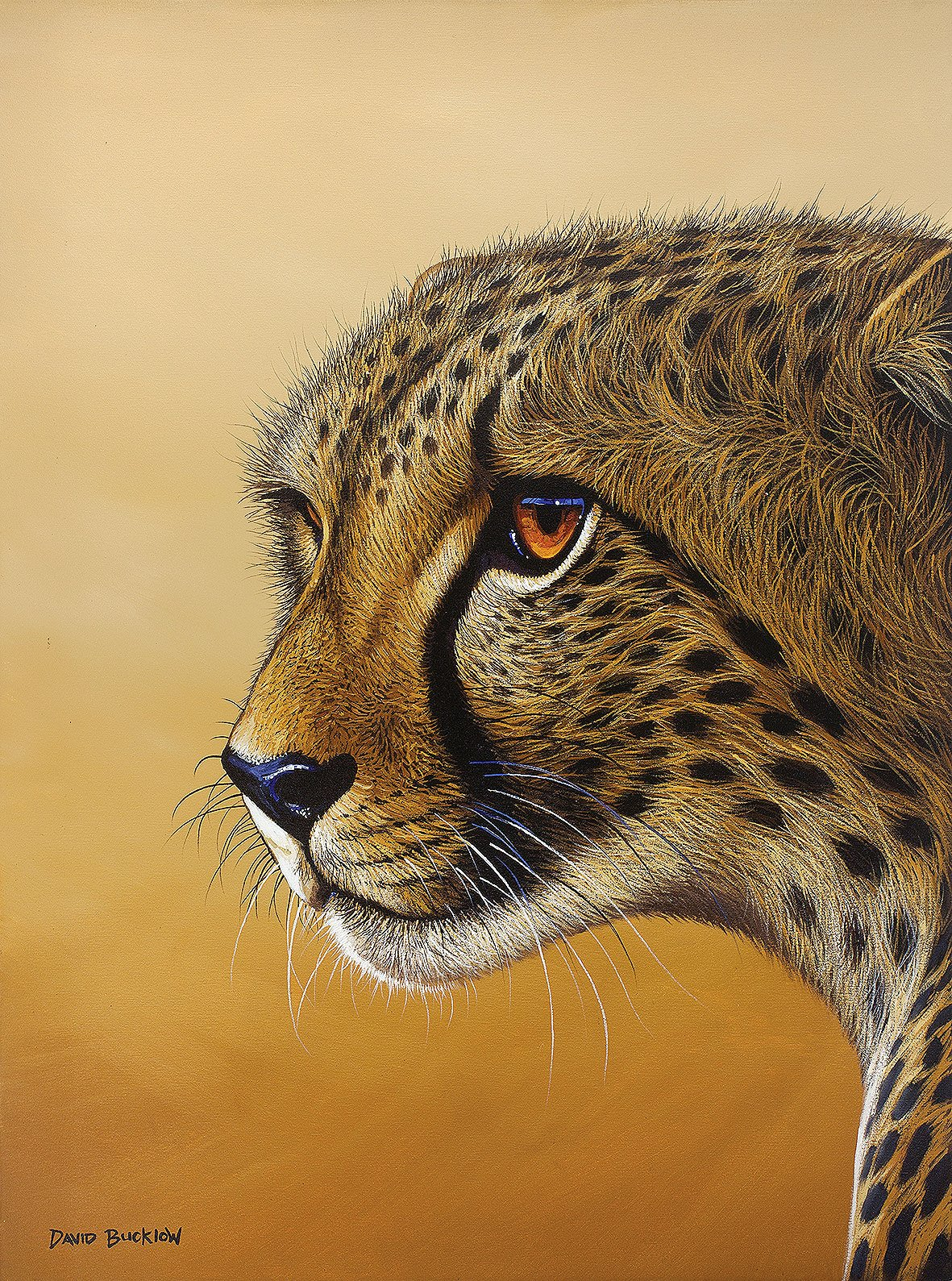 Cheetah Print by artist David Bucklow entitled Desert Gaze