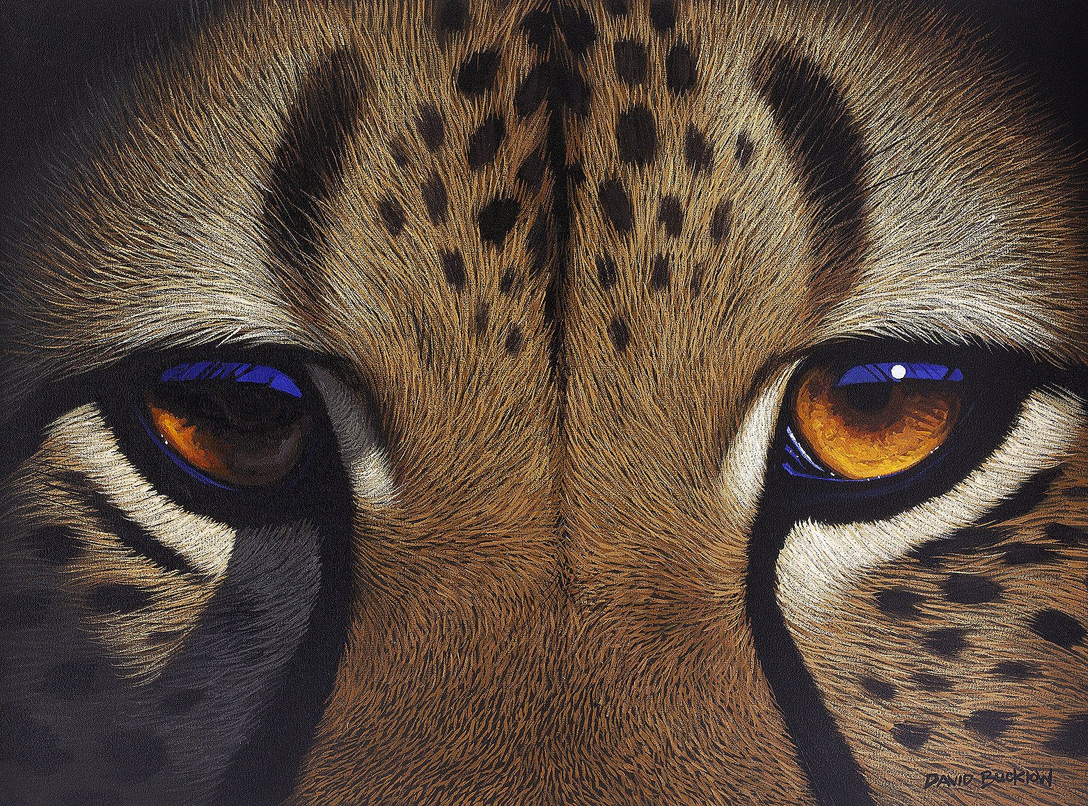 A fine art print of a cheetah's eyes up close painted by artist David Bucklow