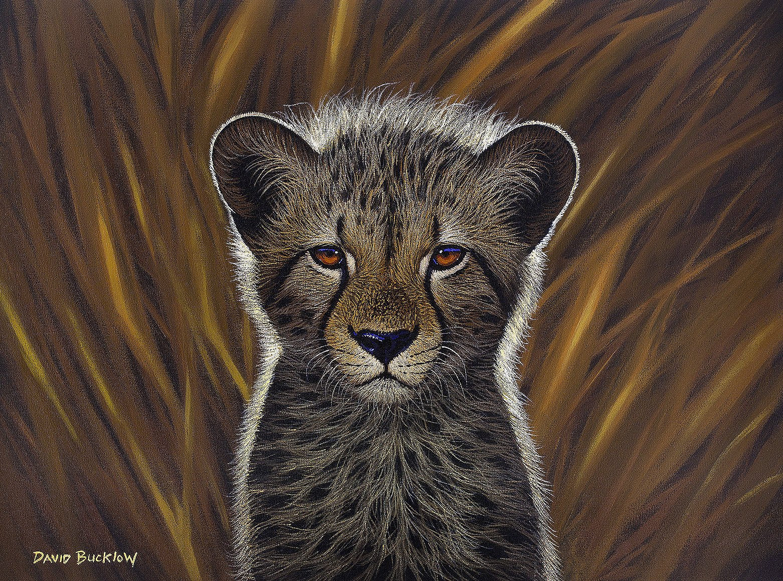 South African Limited Editions by David Bucklow - Fuzzball - Cheetah Cub - Fine Art Portfolio