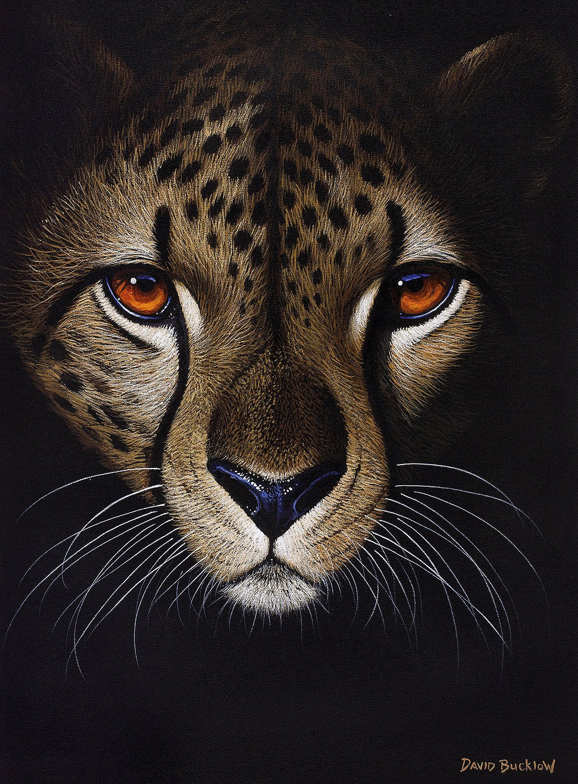 A beautiful painting of a cheetah about to start running by artist David Bucklow. The artwork has painted the cheetah at night.