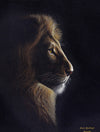 South African Limited Editions by David Bucklow - Moonlight Encounter - Male Lion - Fine Art Portfolio