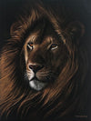 Beauty of the King | Lion