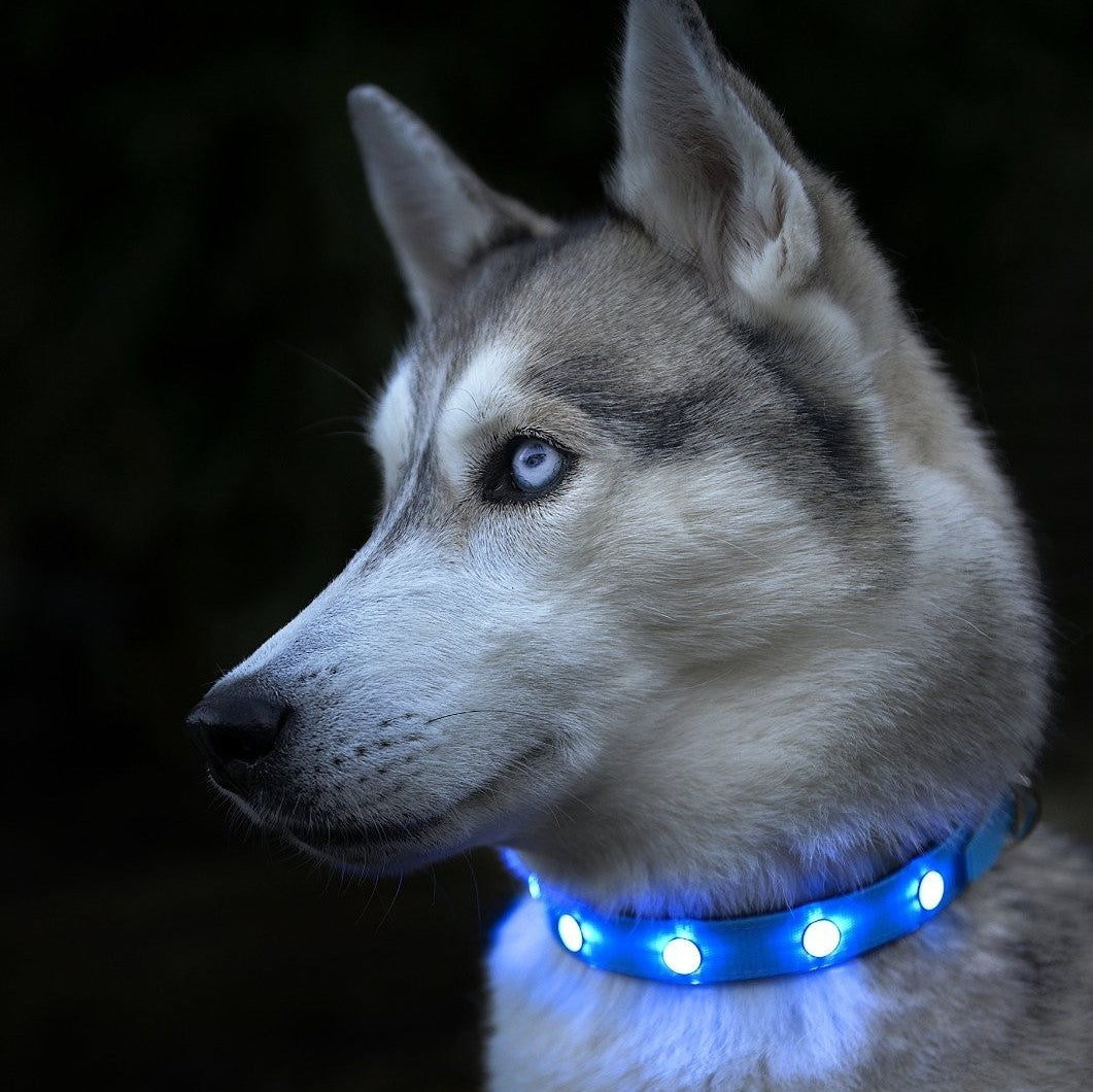 SafePup LED Dog Collar