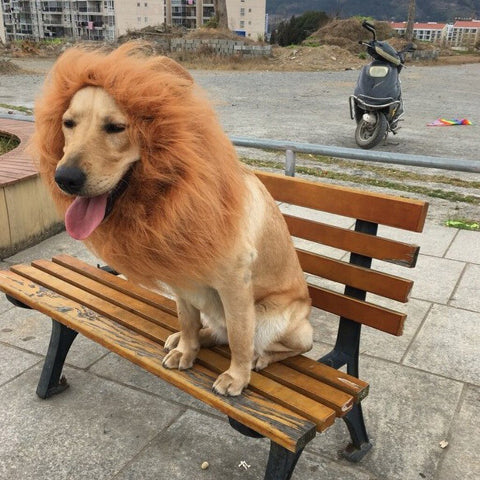 Funny Pet dog Cosplay Clothes Transfiguration Costume Lion Mane Winter Warm Wig Cat large Dog Party Decoration + Ear Pet Appar - dare to wear your hair