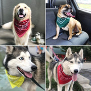 Hip-hop Bandanas for men, women, children and even trendy dogs - dare to wear your hair
