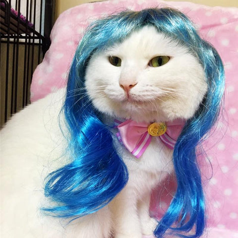 [MPK Cat Wigs] Yellow and Blue Cat Wigs, Pet wig, Funny Cat Wig, Cat Costume - dare to wear your hair