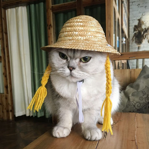 Pet Wig 2019 Pet Straw Hat Pet Cat Wig Pet Dog Wig Pet Cap Cat Straw Hat - dare to wear your hair