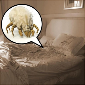 BugOut - Natural Dust Mites & Bed Bugs Killer