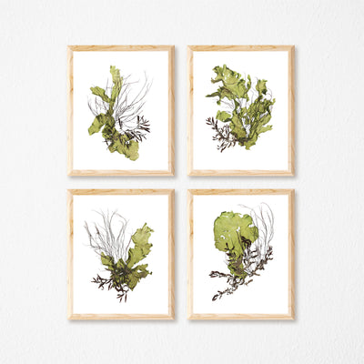 """Cohort"" - Set of Four 11x14 Art Prints"