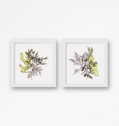 """Commensalism"" - Set of Two 12x12 Art Prints"