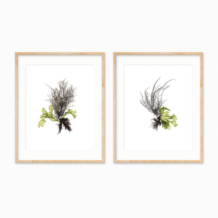 """Community"" - Set of Two 8x10 Art Prints"