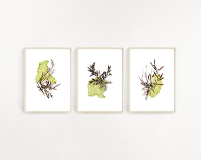 """Mutualism"" - Set of Three 5x7 Art Prints"