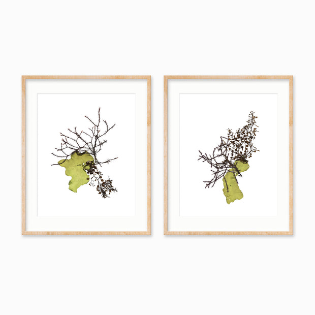 """Symbiosis"" - Set of Two 5x7 Art Prints"