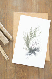 "Blank Greeting Card - ""Wintergreen I"""