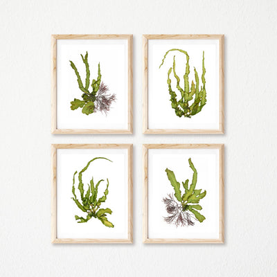 """Intertidal Zone"" - Set of Four 8x10 Art Prints"
