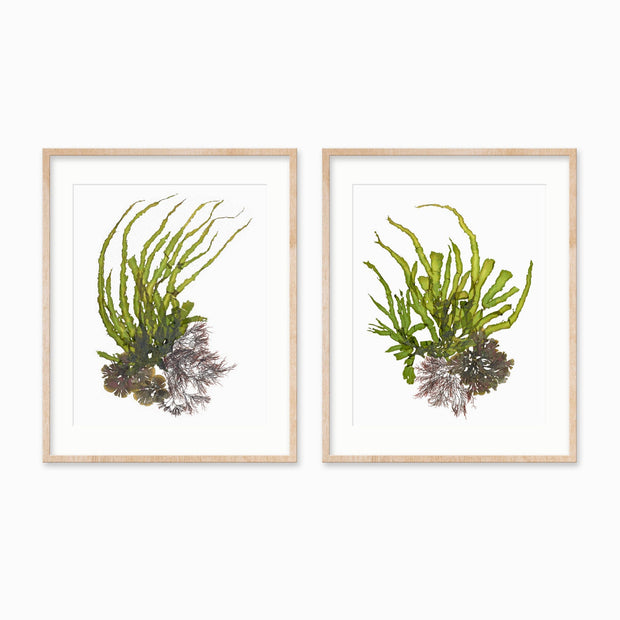 """Crests"" - Set of Two 18x24 Art Prints"