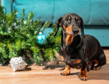 Sparky's Indoor Holiday Safety Tips