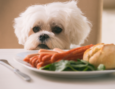 Sparky's Thanksgiving Tips for Dogs