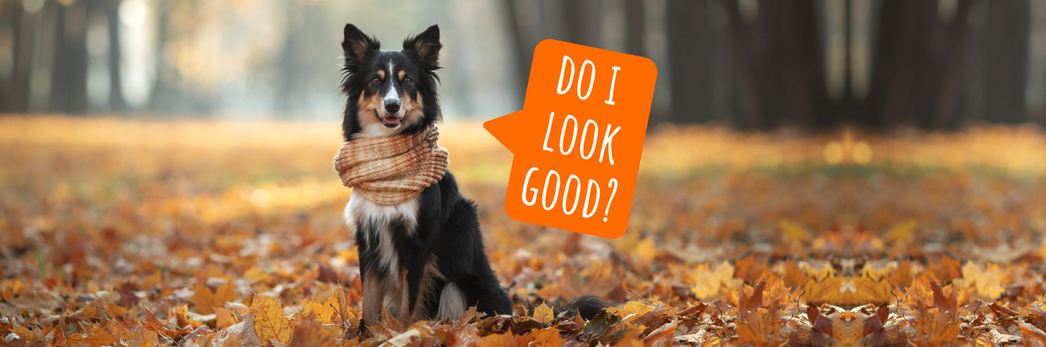 Fall photoshoot, photoshoot with your dog