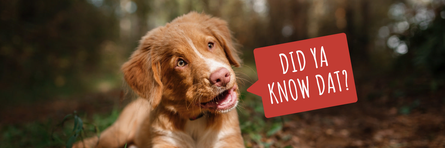 facts about dogs, dog facts
