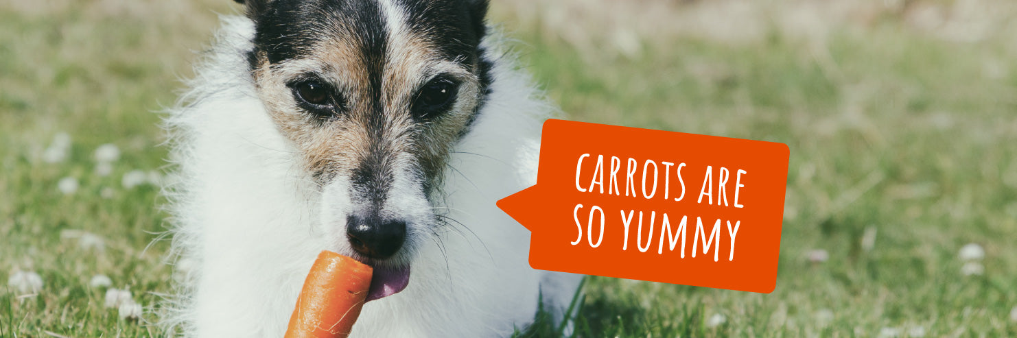 fruits for dogs, vegetables for dogs, veggies for dogs