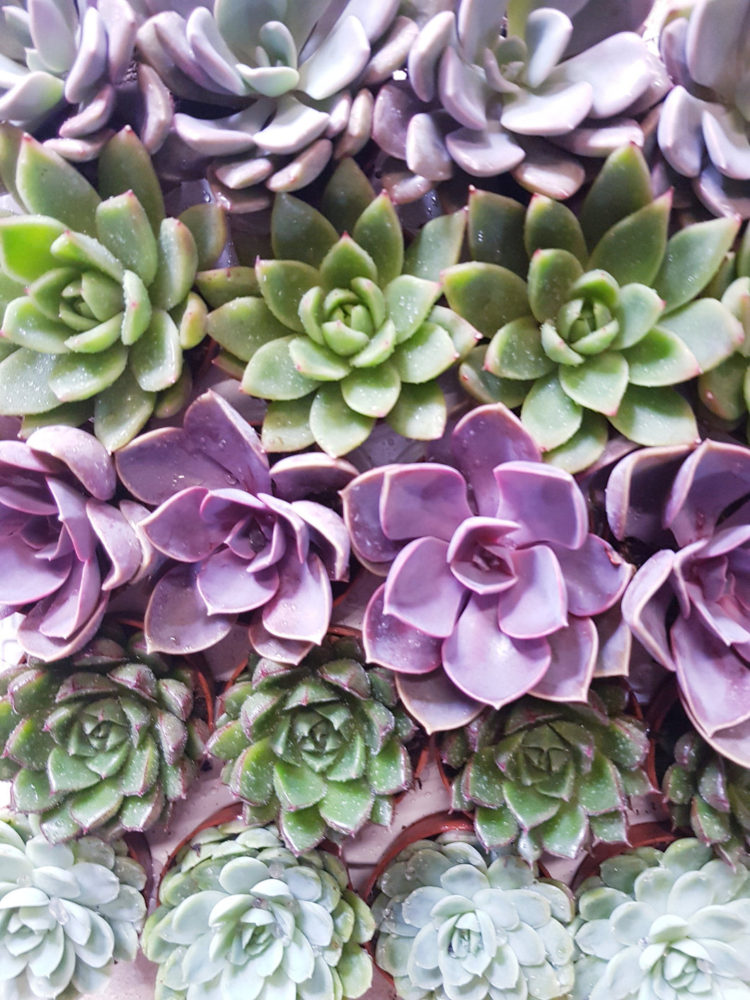 Pick And Mix Set Of 3 Small Succulent House Plants Small Easy Care Ho Pretty Cactus Plants