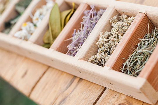 8-adaptogen-herbs-of-immortality