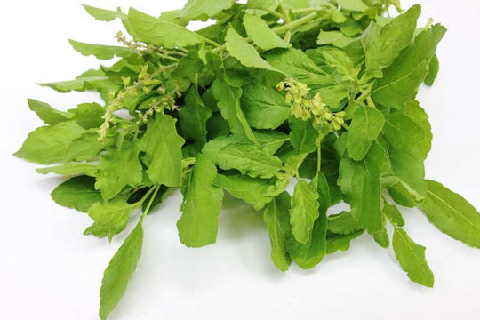 benefits-of-holly-basil