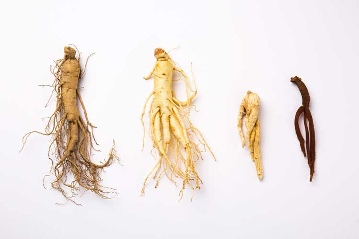 different-types-of-ginseng-and-its-uses