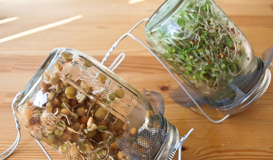 The Benefits of Sprouting Grains