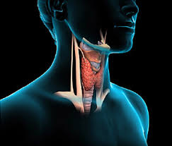 Trouble Losing weight? Could be Your Thyroid!