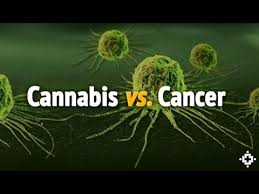 cannacancer