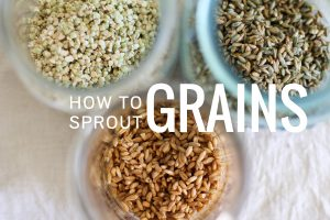 how_to_sprout_grains_featured