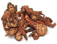 salvia traditional Chinese medicine
