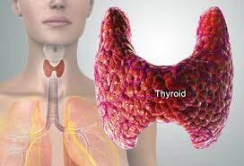 thyroid pic
