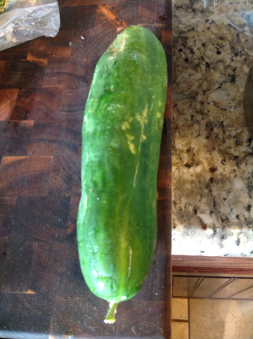 Heirloom Cucumber large