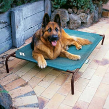 Load image into Gallery viewer, Coolaroo Raised Dog Bed-Best4Bulldogs