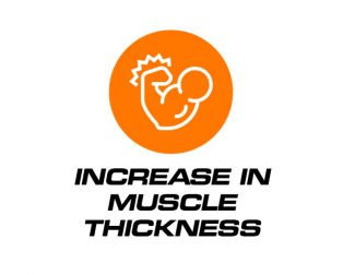 Increase In Muscle Thickness