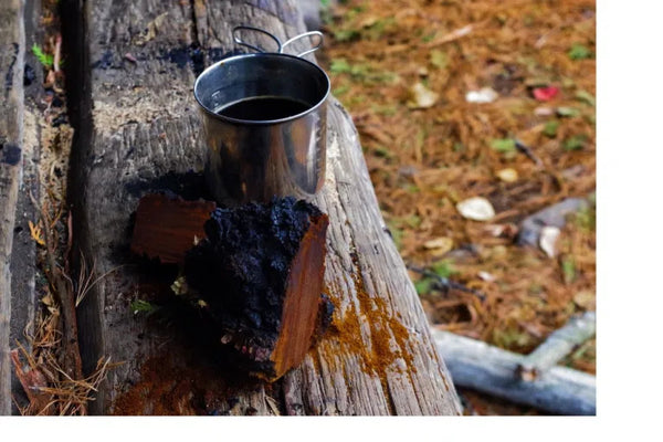 Chaga Preparation According to Cree Healer Sherri Anderson