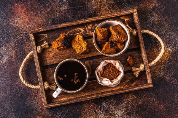 How to make Chaga extract or Chaga tea in a slow cooker