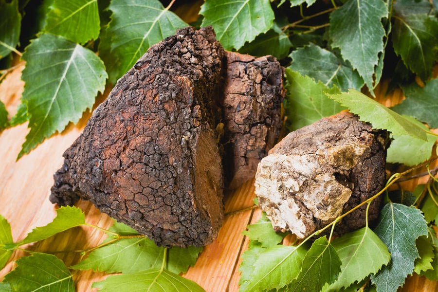 What Are The Benefits of Chaga?